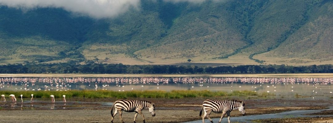 ngorongoro wildlife