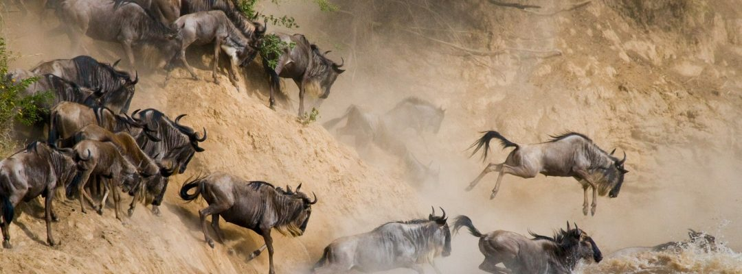 wildebeests-crossing-mara-river-serengeti-national-park-1920x1080
